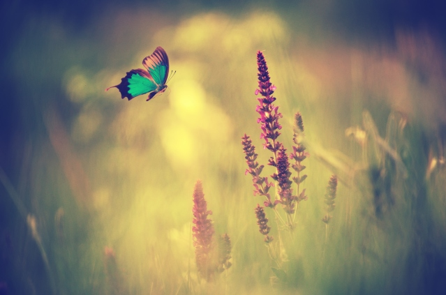 Blue butterfly flying spring meadow